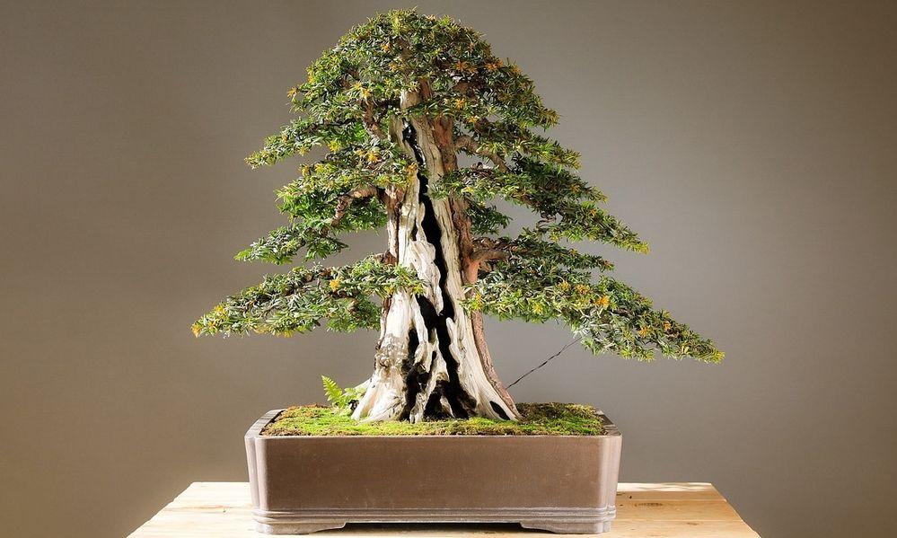 Jak Stworzyć I Uprawiać Drzewka Bonsai Target