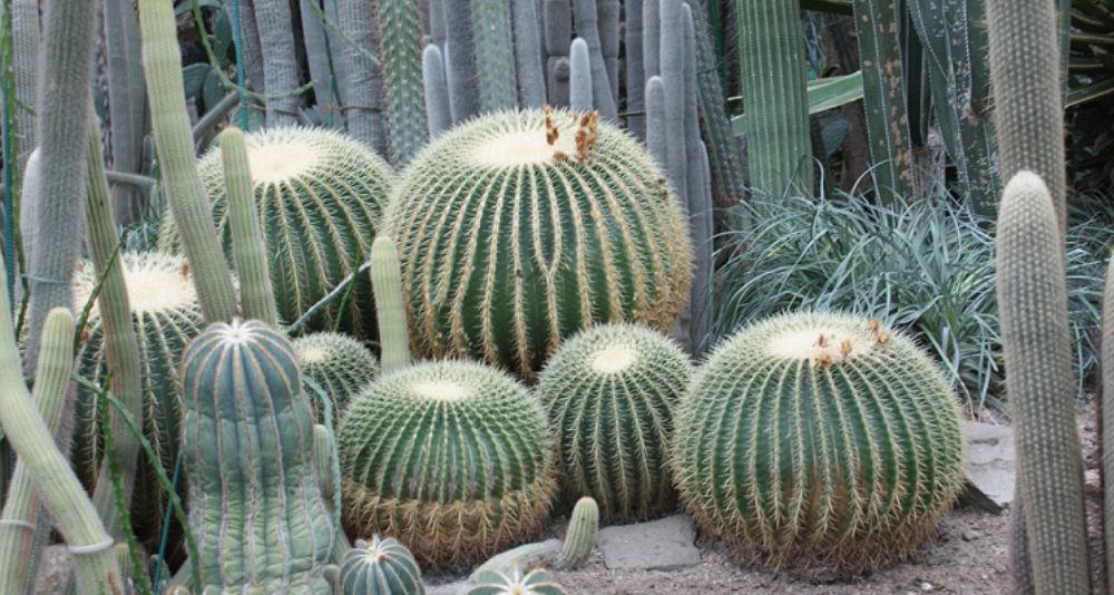 W Jaki Sposób Uprawiać Kaktusy I Sukulenty Target